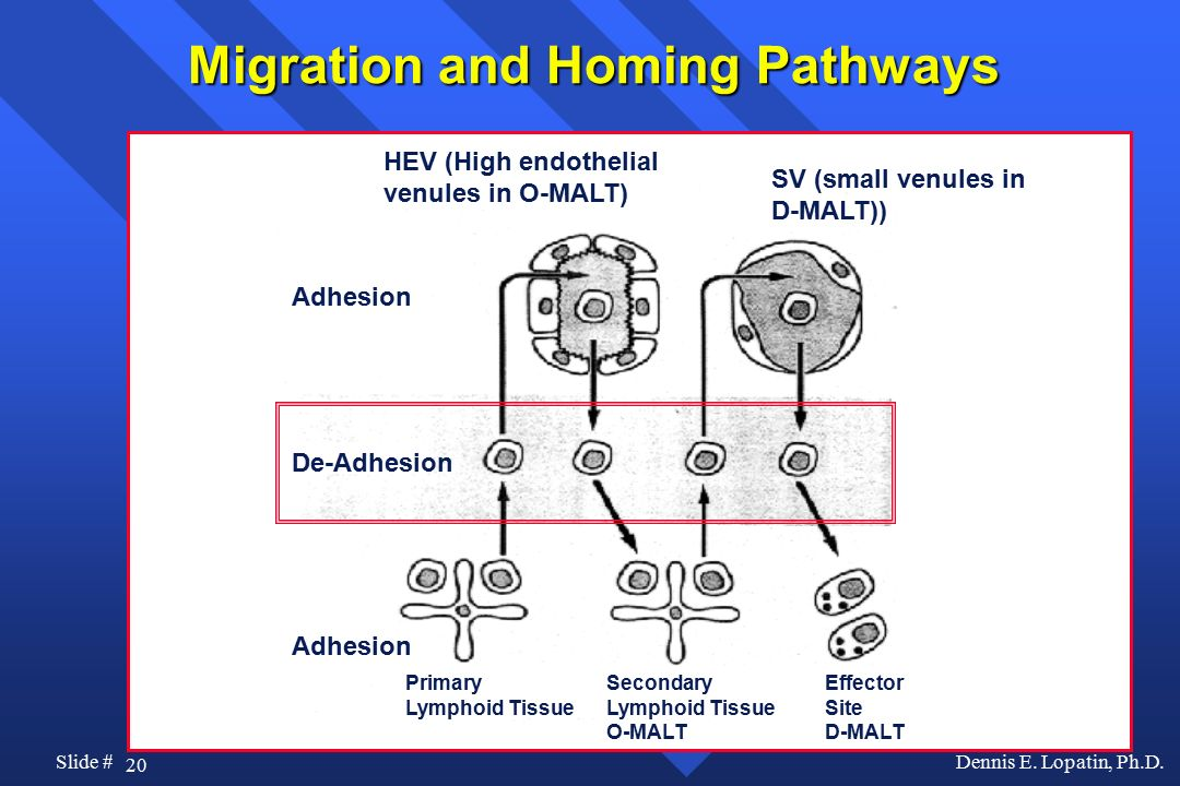 Migration and Homing Pathways