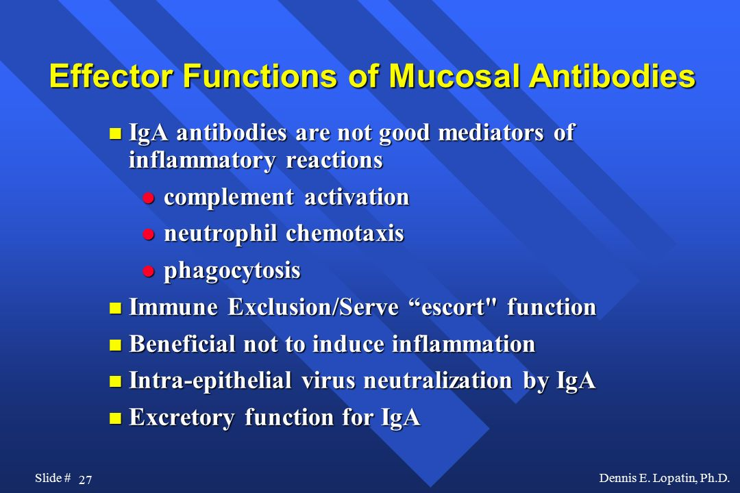 Effector Functions of Mucosal Antibodies