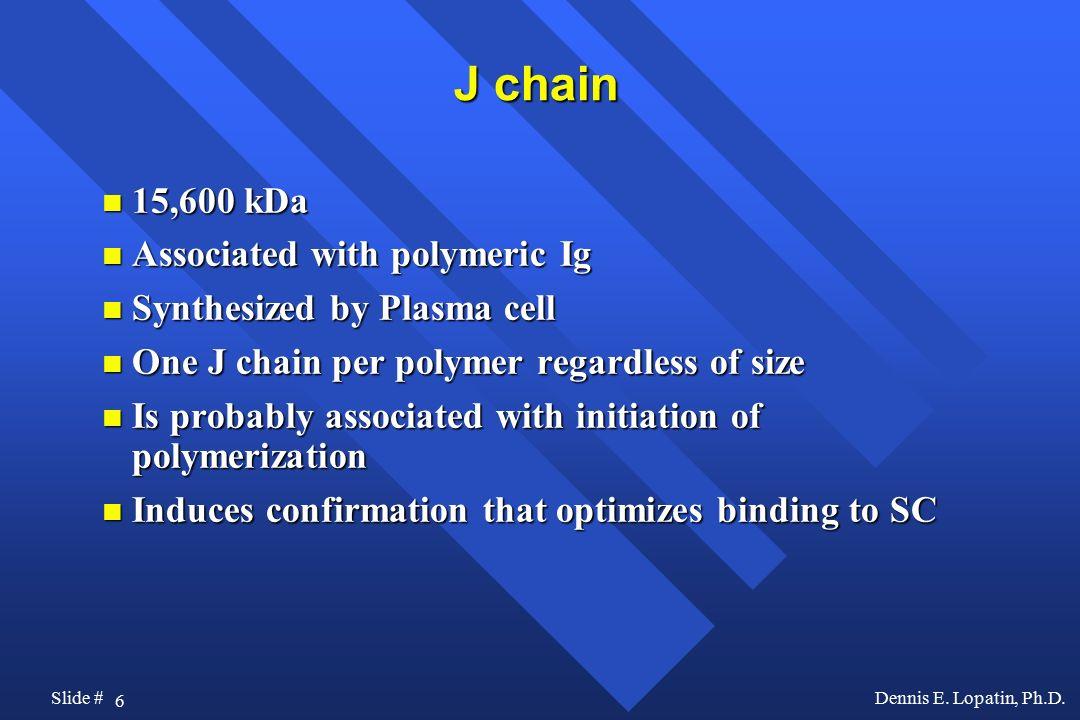 J chain 15,600 kDa Associated with polymeric Ig