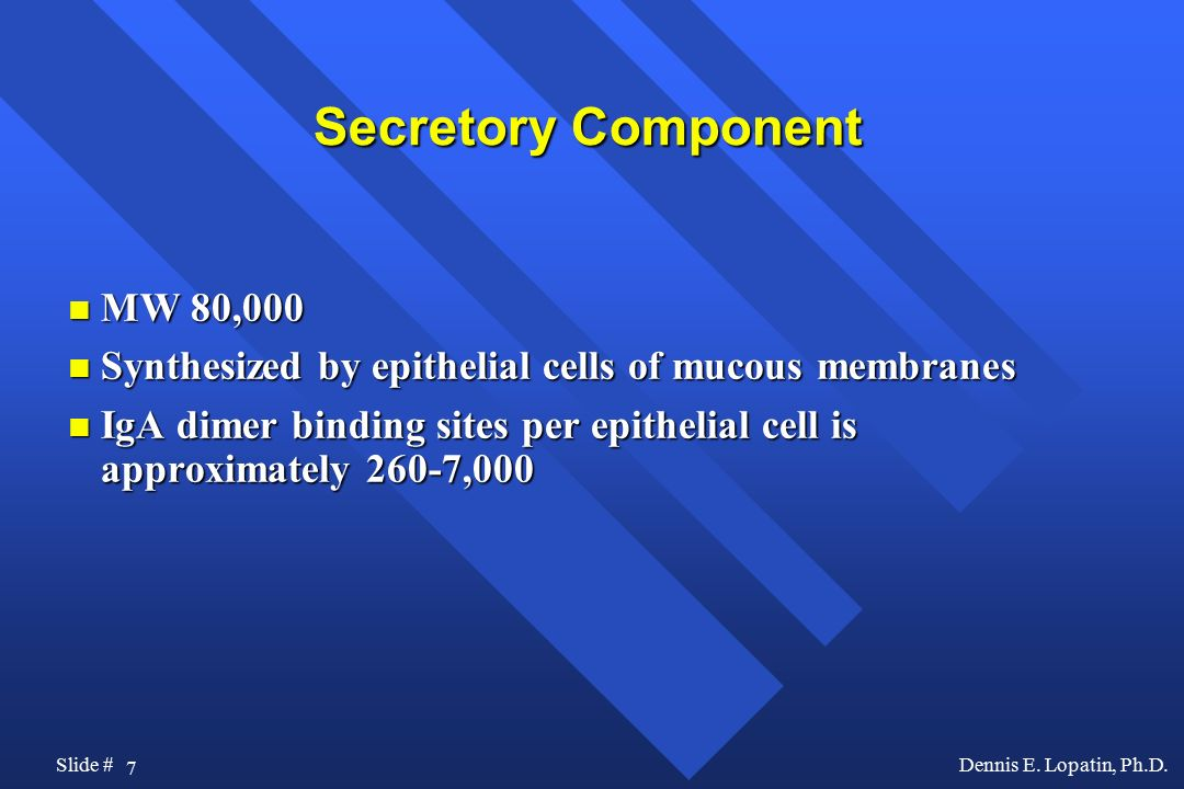 Secretory Component MW 80,000