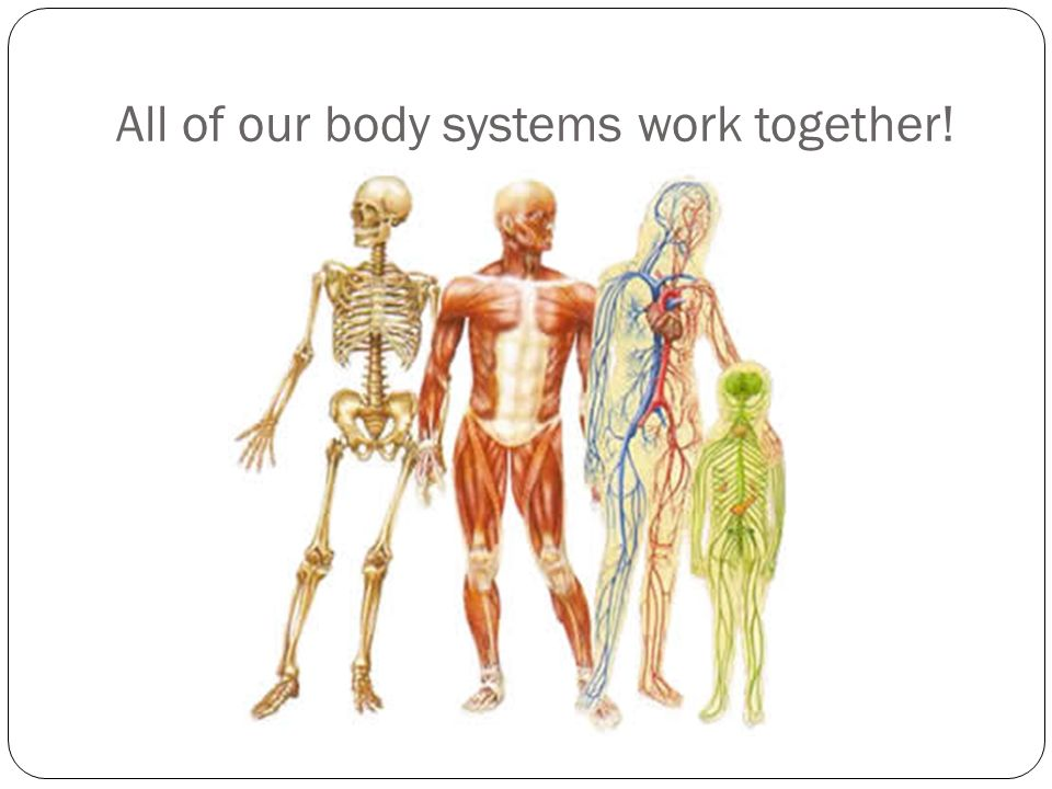 How The Body System Works Ibovnathandedecker