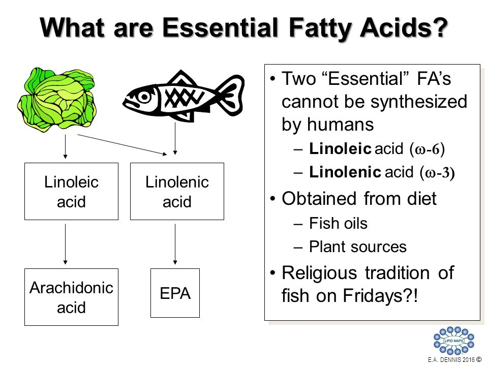 Professor edward a dennis ppt video online download for Fish oils are a good dietary source of