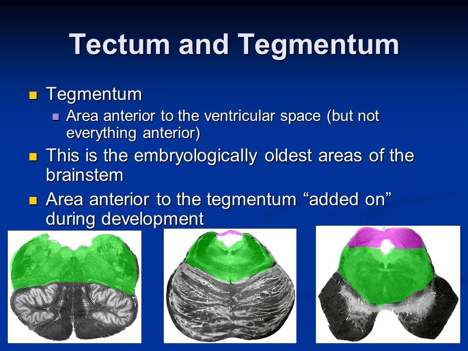 Tectum Development audio video photo