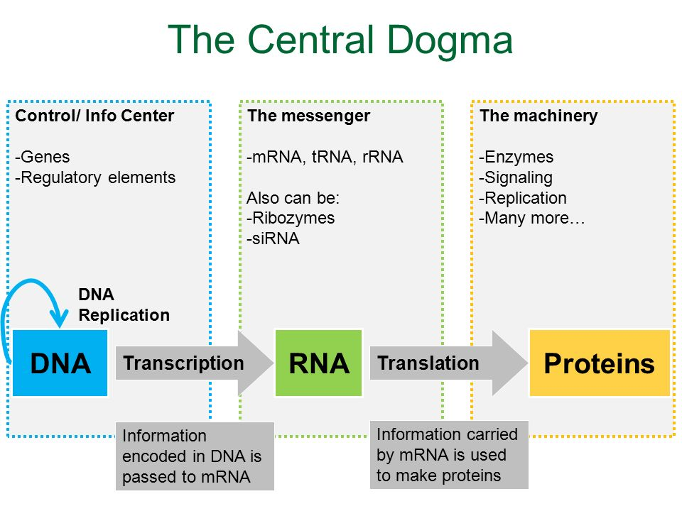 central dogma of life pdf