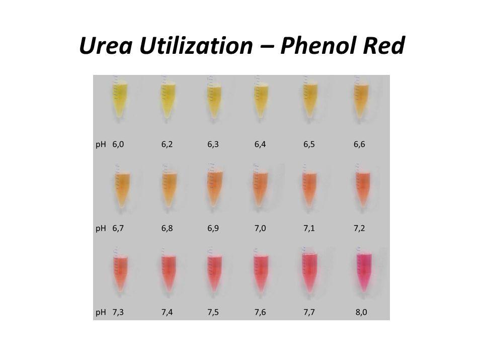 Phenol Red Colors Agcrewall