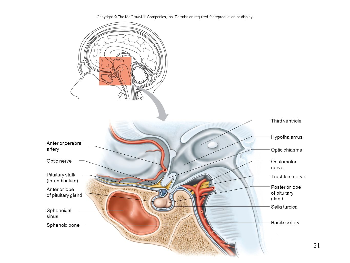 3rd ventricle anatomy 3852159 - follow4more.info