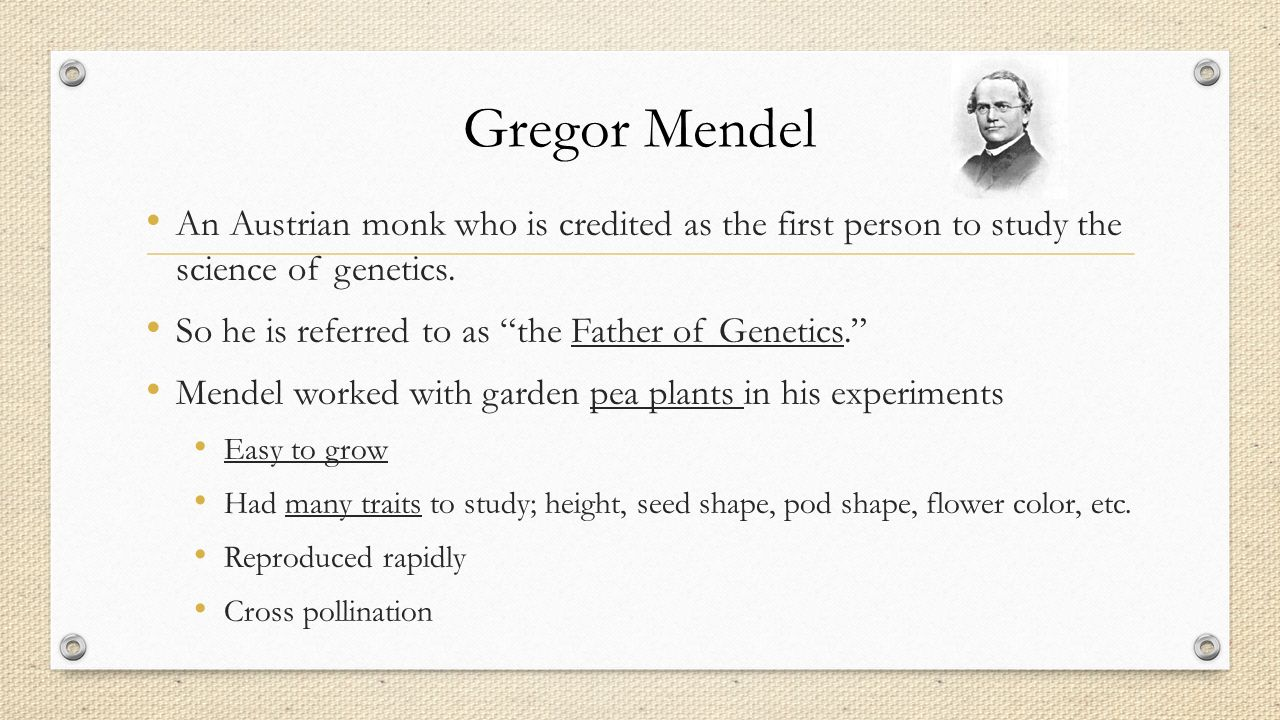the scientific work of gregor mendel the father of genetics Today, mendel is known as the father of modern genetics, although unfortunately he never lived to see the widespread acclaim for his work or the fame that attended it he continued to live out his life as abbot of the monastery, where he taught and held fast to his christian faith.