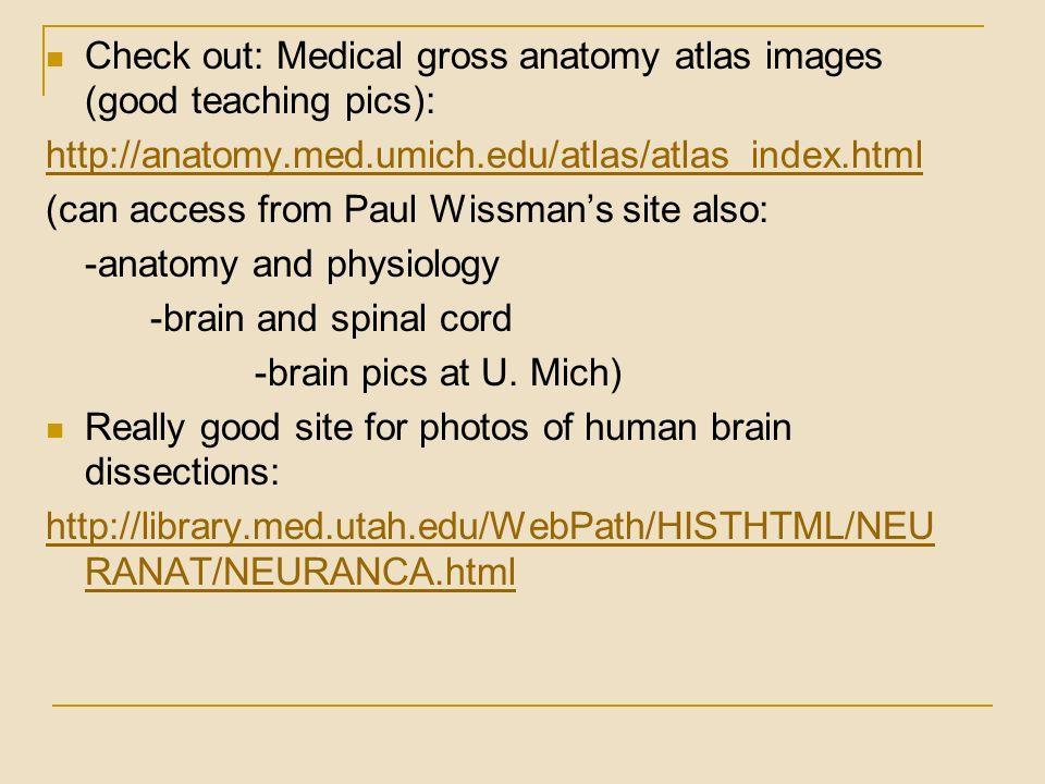 University of michigan gross anatomy