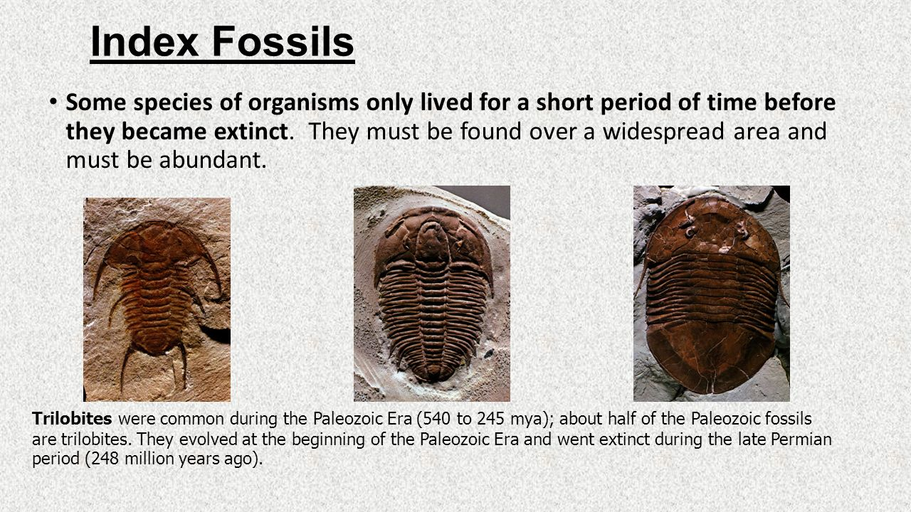 Fossils amp Ruins News  ScienceDaily