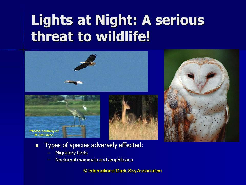 Lights at Night: A serious threat to wildlife!