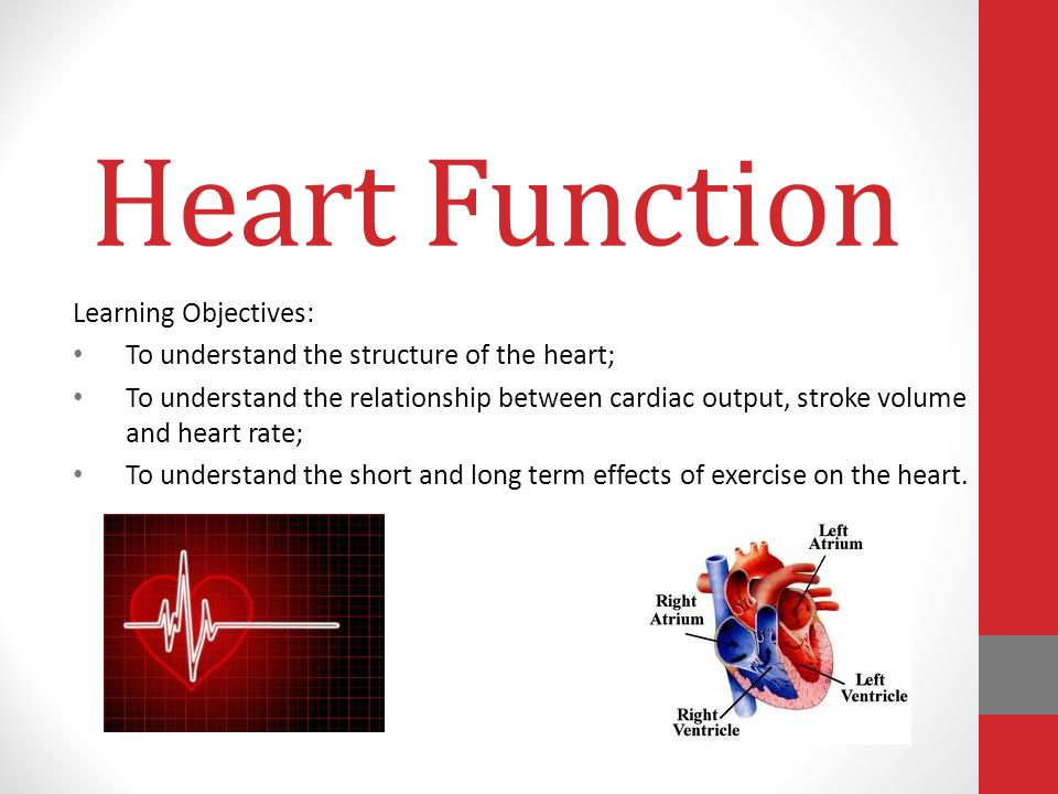 Heart Function Learning Objectives Ppt Video Online Download