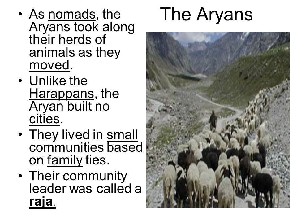 The Aryans As nomads, the Aryans took along their herds of animals as they moved. Unlike the Harappans, the Aryan built no cities.