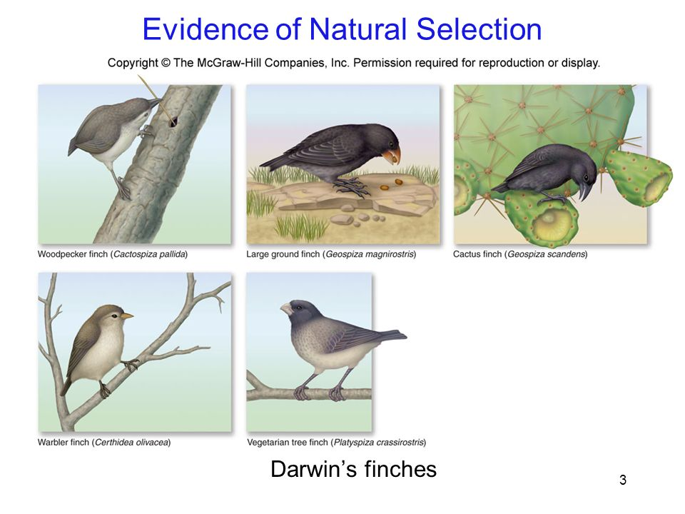 Is Natural Selection Evidence For Evolution