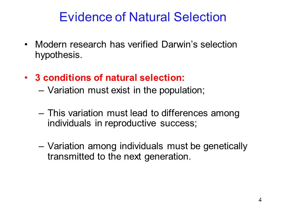 Natural Selection And Evidence For Evolution Custom Paper Service. Natural Selection And Evidence For Evolution Since Darwin First Proposed His Ideas About Biological. Worksheet. Evolution Webquest Worksheet At Mspartners.co