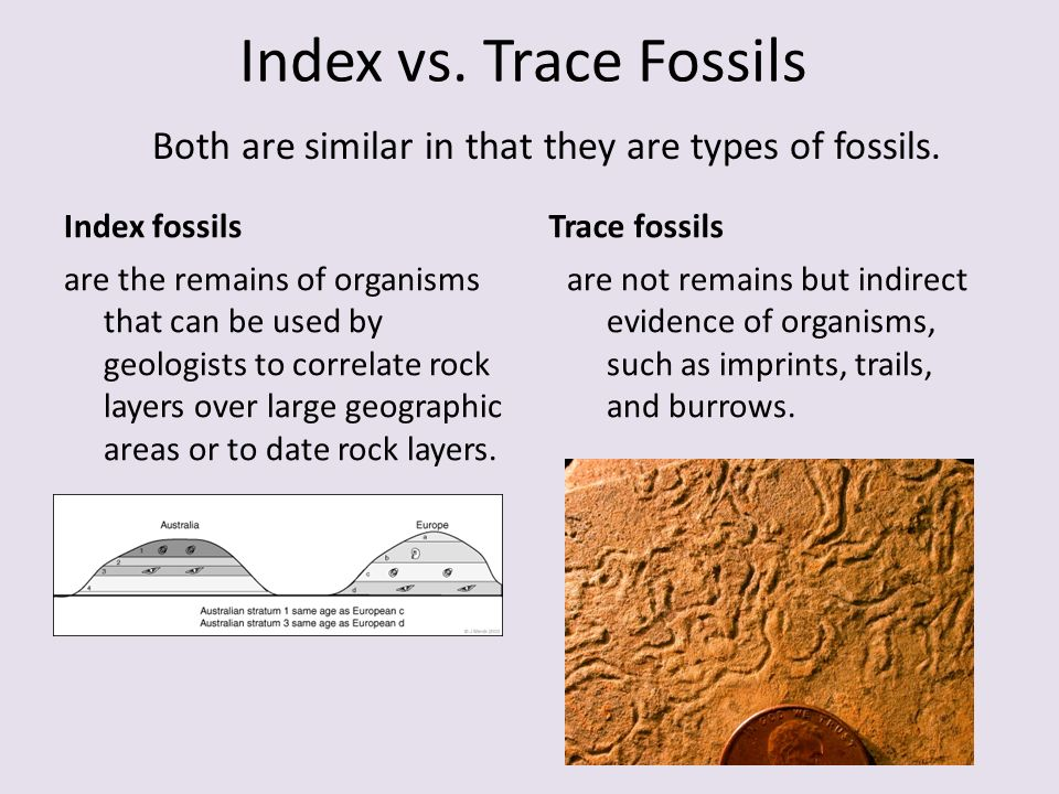 different types of fossil dating Learn about different types of radiometric dating, such as carbon dating understand how decay and half life work to enable radiometric dating play a game that tests your ability to match the percentage of the dating element that remains to the age of the object.