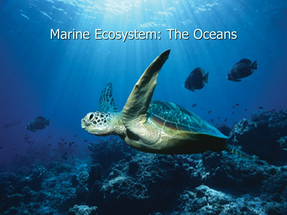 Marine Ecosystem: The Oceans