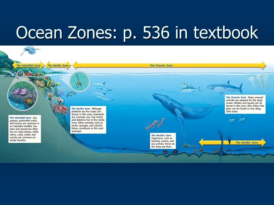Ocean Zones: p. 536 in textbook