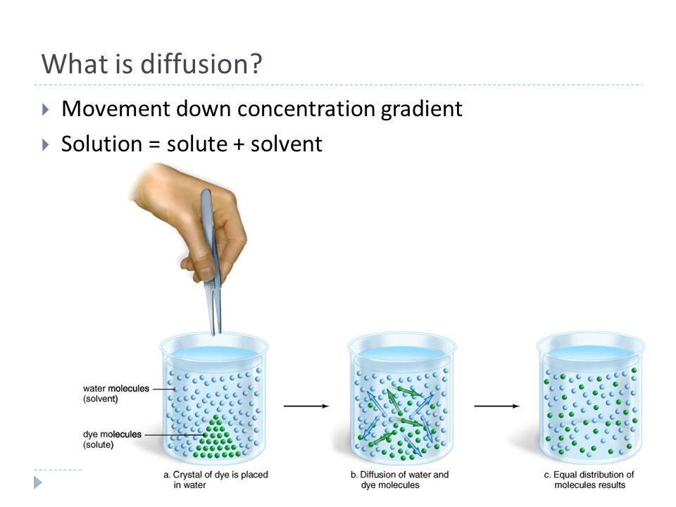 the effect of concentration gradient on The effect of concentration gradient on osmosis abstract: osmosis is the passive movement of water from an area of higher concentration to an area of lower concentration, usually across a membrane (thorpe 2013.