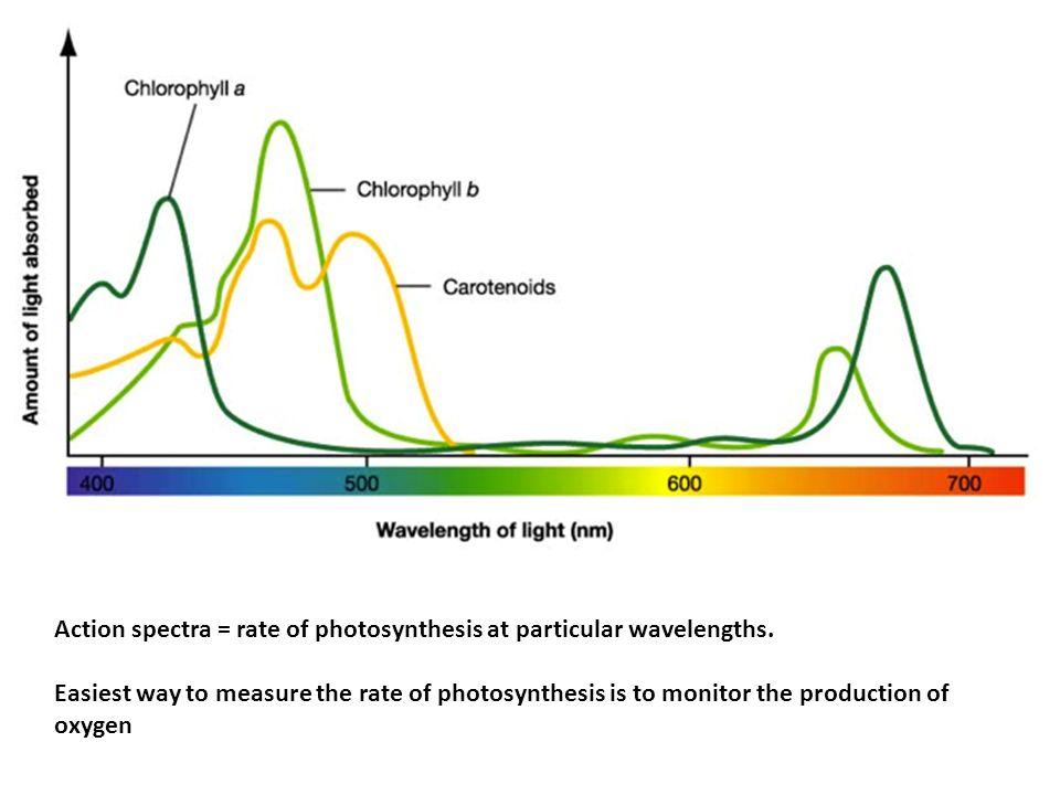 internal factors affecting photosynthesis