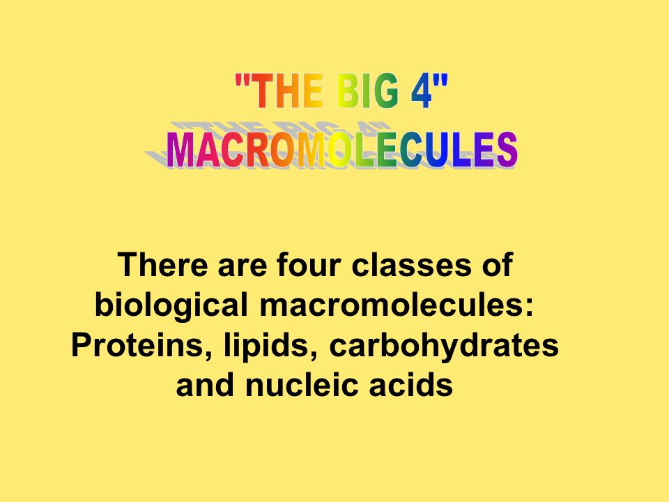 THE BIG 4 MACROMOLECULES.