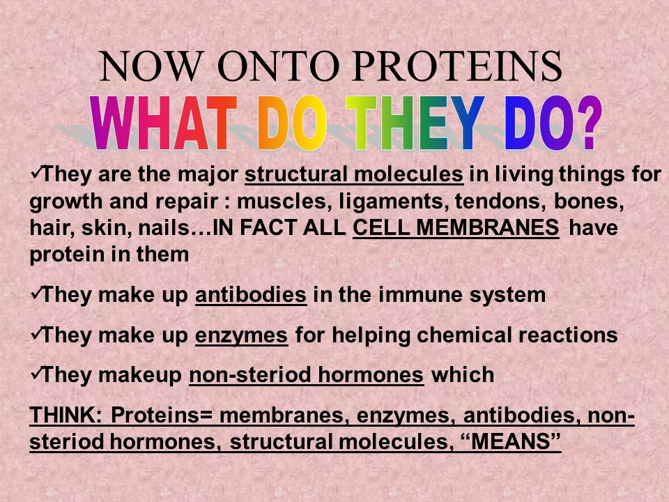 NOW ONTO PROTEINS WHAT DO THEY DO