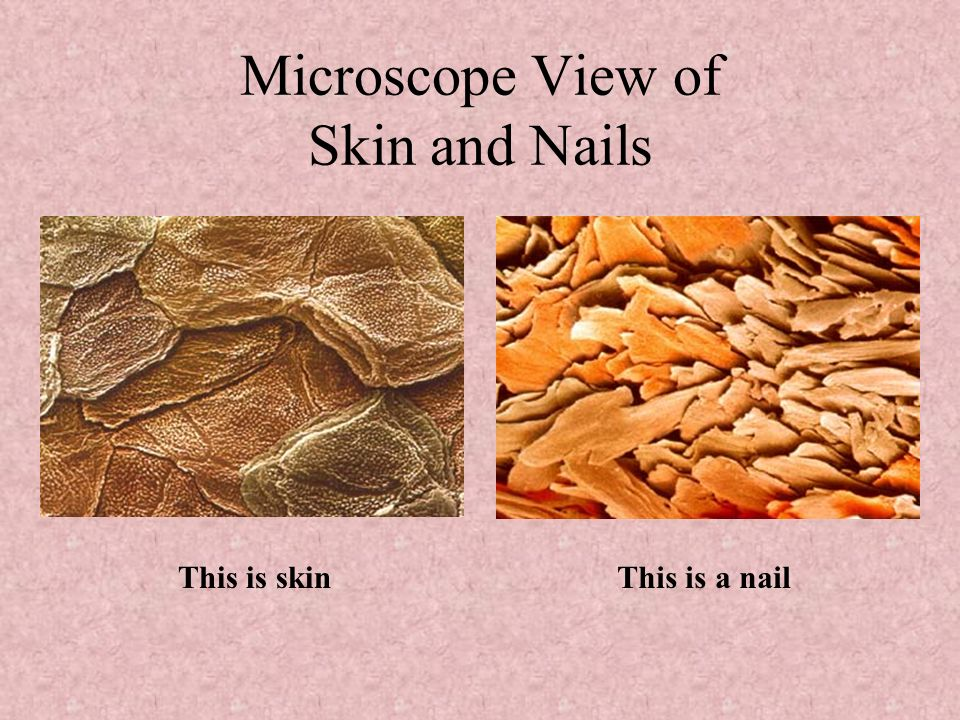 Microscope View of Skin and Nails