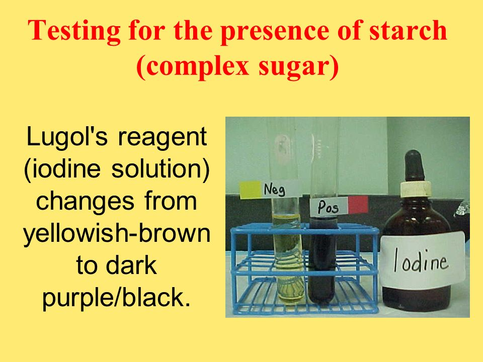 Testing for the presence of starch (complex sugar)