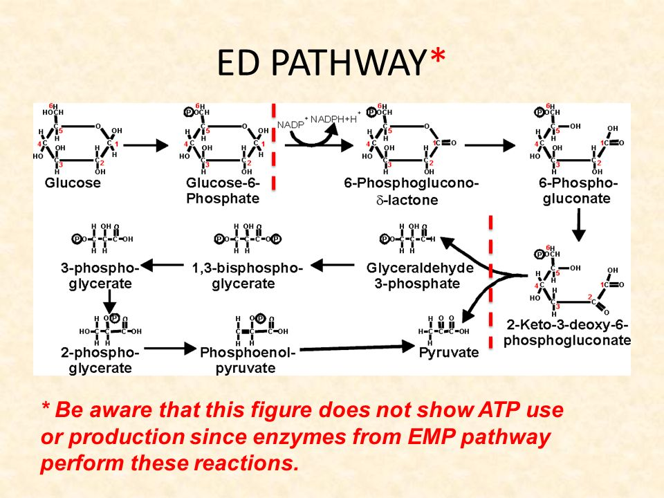 Glycolysis Diagram With Enzymes