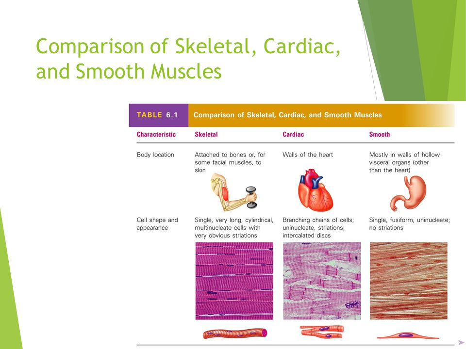 the muscular system muscles are responsible for all types of body, Muscles