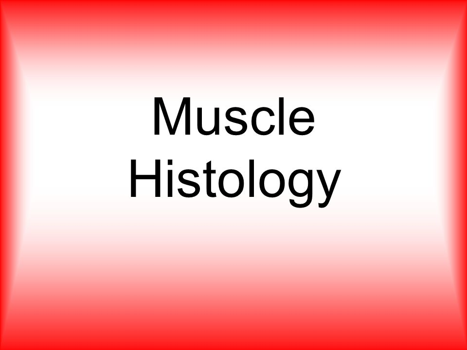 Muscle Histology