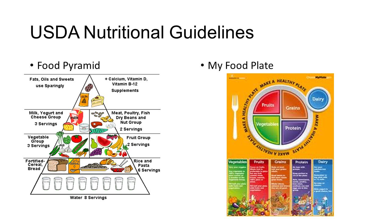 what is the usda food guide