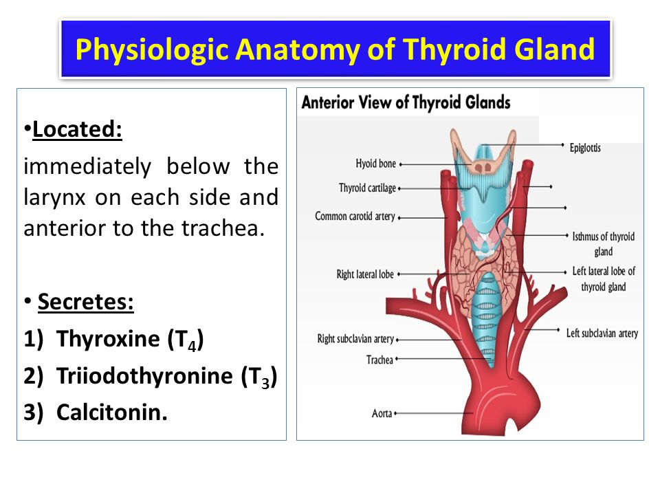 Thyroid anatomy ppt