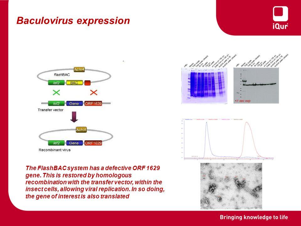 52 Baculovirus expression. The FlashBAC ...