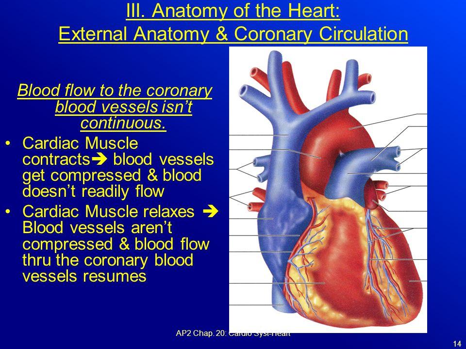 External Heart Anatomy Coronary Arteries Industrifo