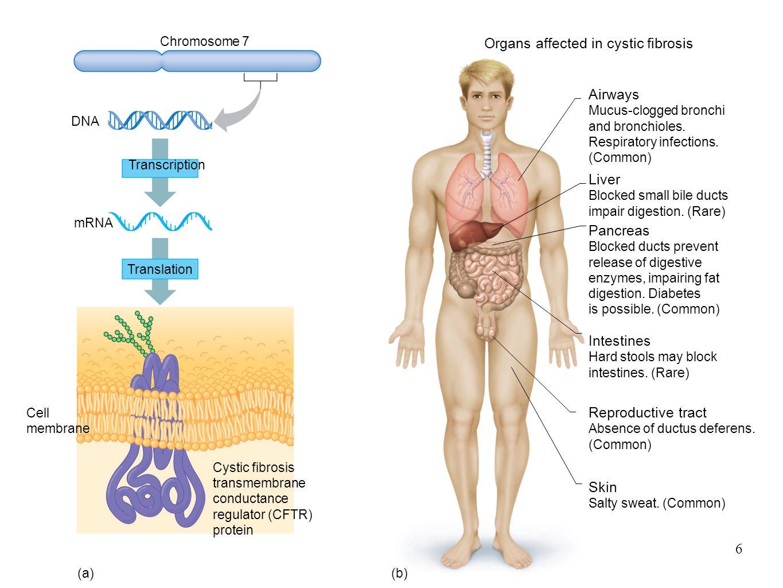 Vistoso Anatomy And Physiology Hard Bandera - Imágenes de Anatomía ...