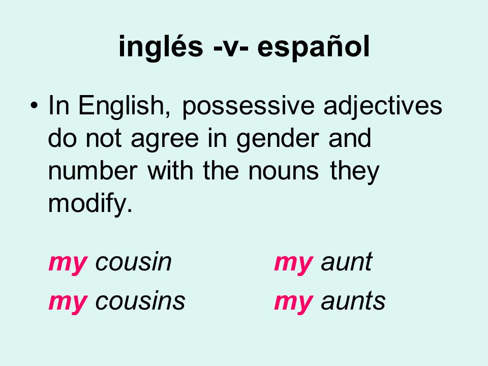 inglés -v- español In English, possessive adjectives do not agree in gender and number with the nouns they modify.