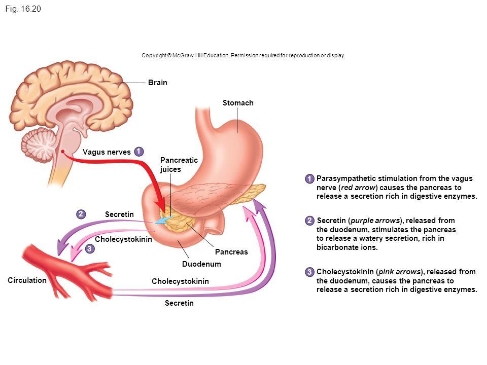 Pharynx (throat) Saliv...