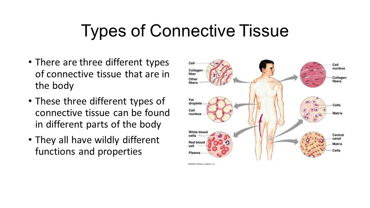the main body tissues This tutorial covers the four main types of tissue in the human body it also includes a description of the anatomical location of those tissues within the body.