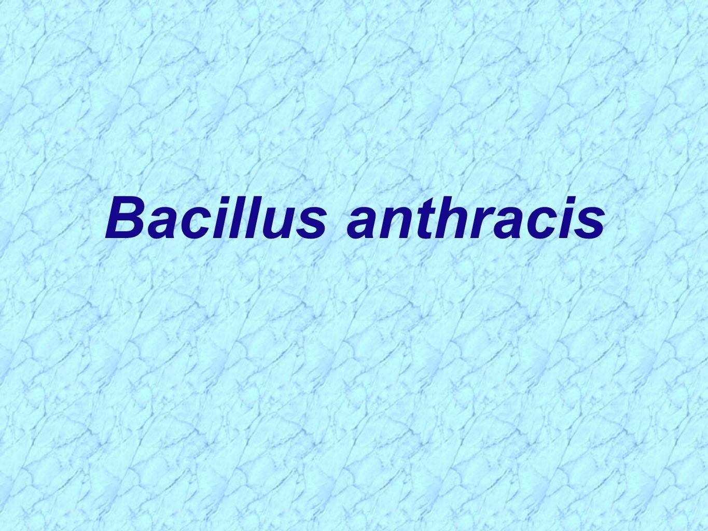 B Anthracis Bacillus D. - ppt vide...