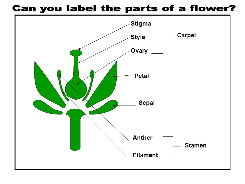 Can you label the parts of a flower