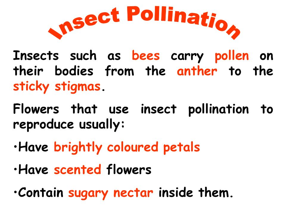 Insect Pollination Insects such as bees carry pollen on their bodies from the anther to the sticky stigmas.