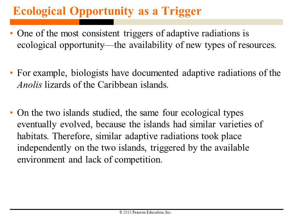 key innovations and adaptive radiations essay Adaptative radiation and key innovations analysis of diversity and disparity department of geological sciences | indiana university (c) adaptive radiation a proliferation of species within a key innovations are new features that facilitate adaptive radiations.