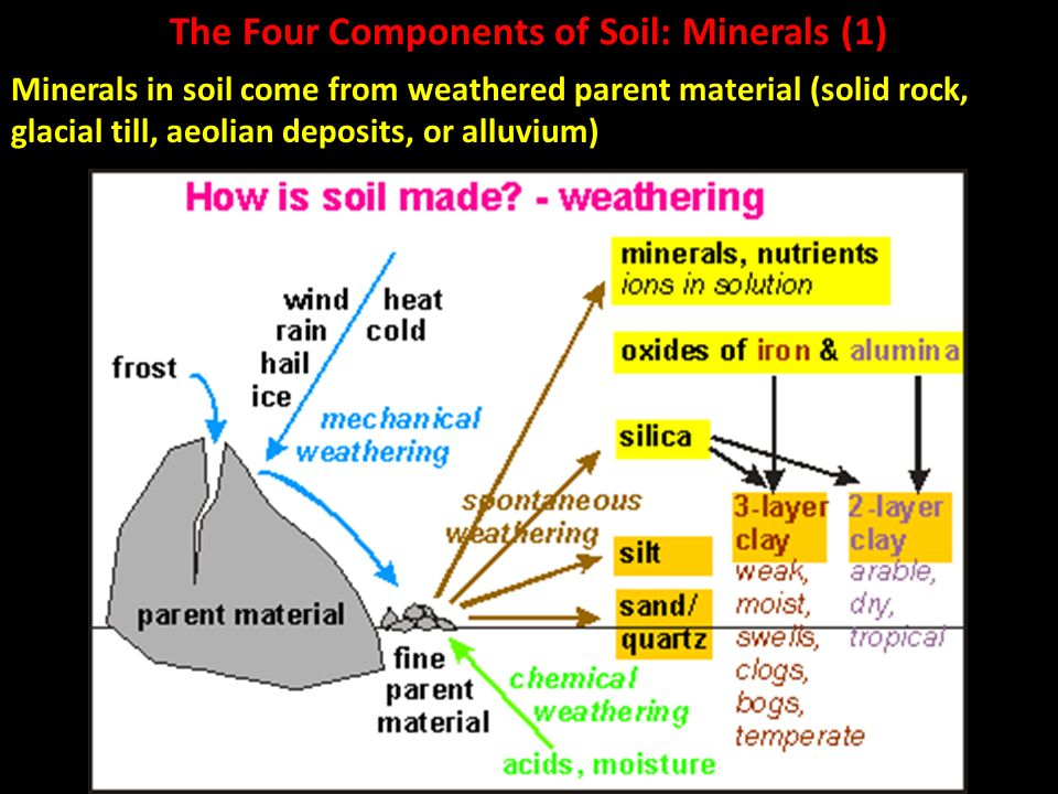 Soil ppt video online download for Four main components of soil