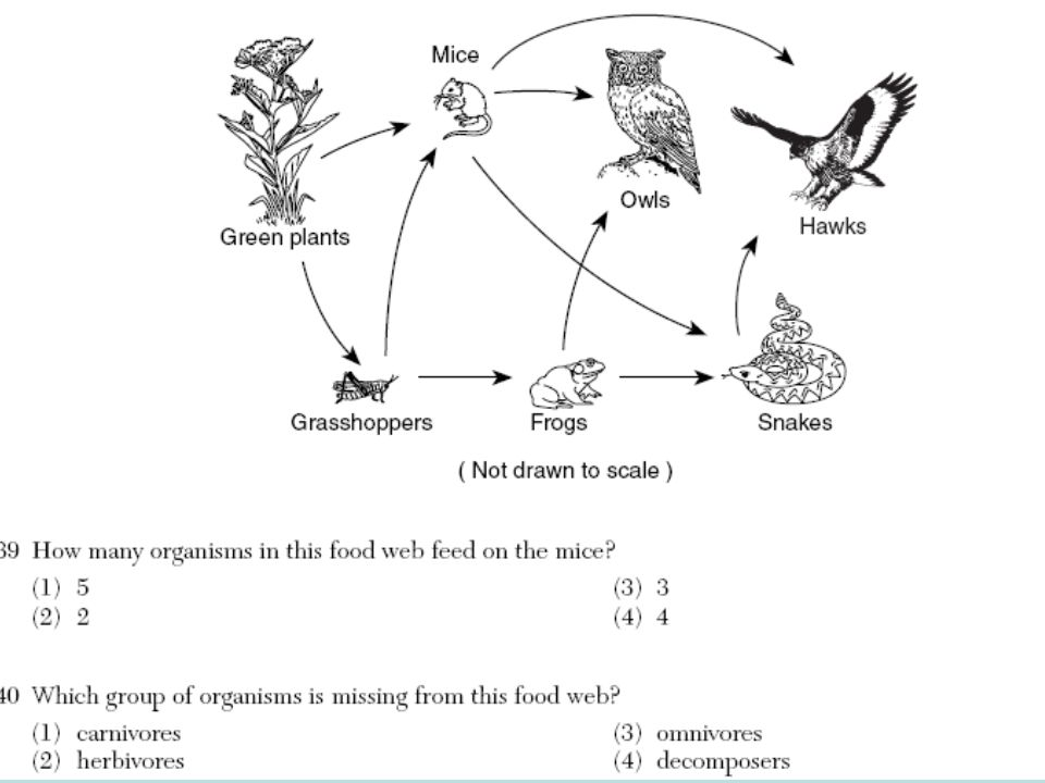 Blue Whale Food Chain additionally 8699604 in addition 7 Forms Of Energy moreover 9415209 further 10. on food chain energy flow through
