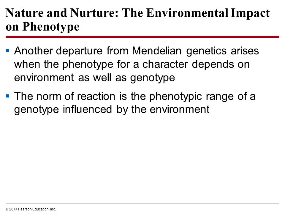 effects of environmental factors on the phenotype of pea plants Figure 141 what principles of inheritance did gregor mendel discover by breeding garden pea plants  plants have the same phenotype  environmental factors.