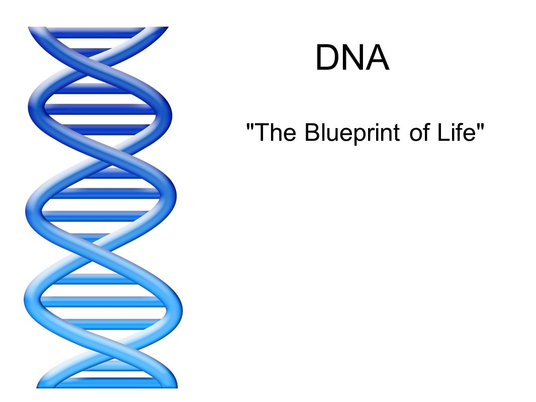 Dna the blueprint of life ppt video online download 1 dna malvernweather Images