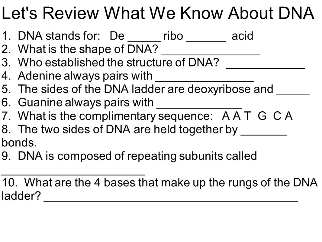 Let s Review What We Know About DNA