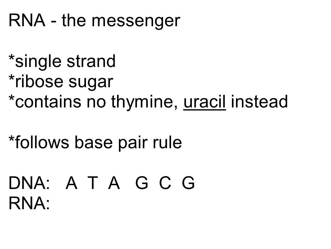 RNA - the messenger. single strand. ribose sugar