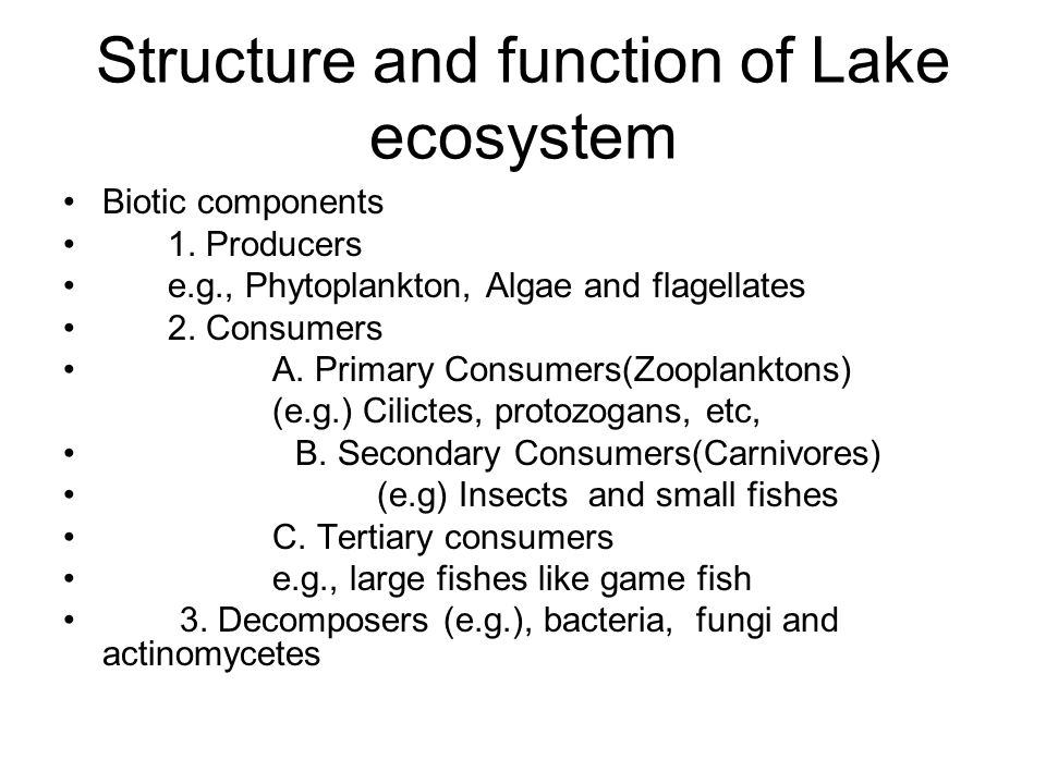 Structure and function of Lake ecosystem
