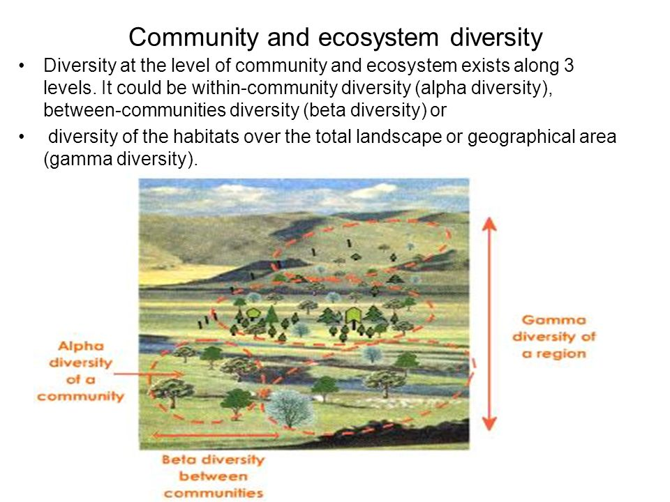 Community and ecosystem diversity